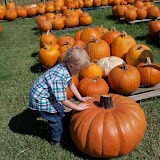 Pumpkin Patch 2015 - 100_0448.JPG