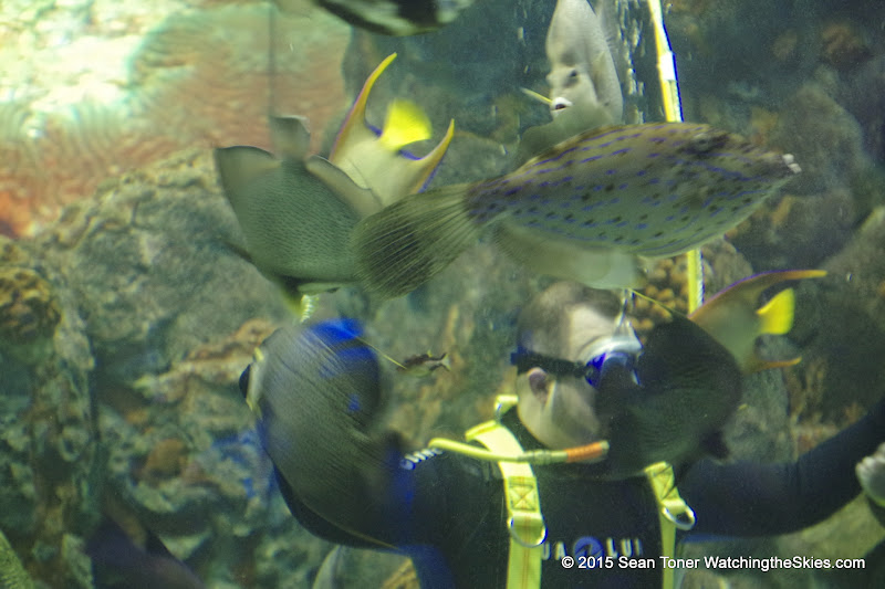 02-08-15 Corpus Christi Aquarium and USS Lexington - _IMG0515.JPG