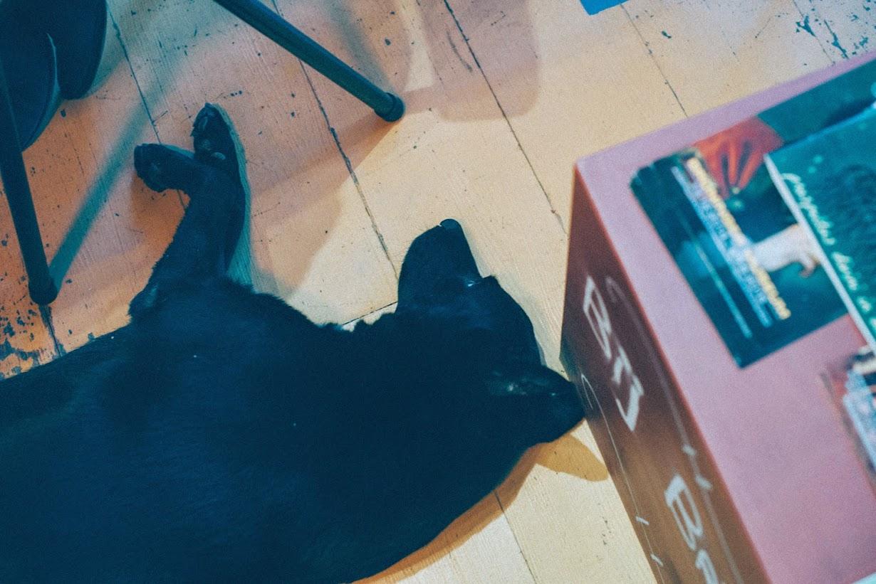 Zwarte labrador Bij Britta huishond