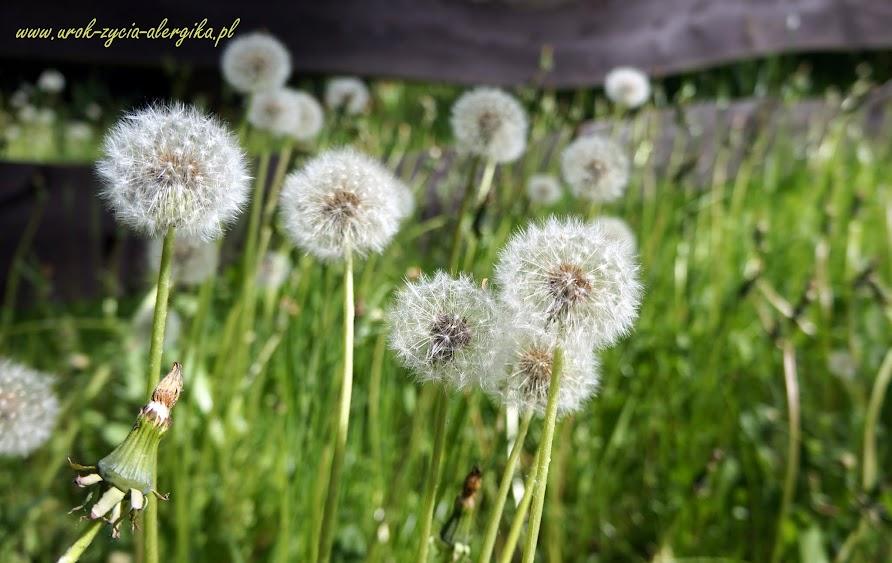 Mój blog o alergii