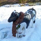 Winterkiekjes Servicetv - Ingezonden%2Bwinterfoto%2527s%2B2011-2012_85.jpg