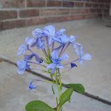 Gardening 2009 - 101_3846.JPG