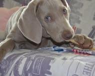 кормление собаки