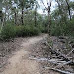 Pisgah Rock Track (143670)