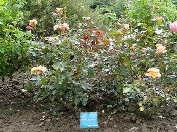 2017.08.10-015 la roseraie des parfums