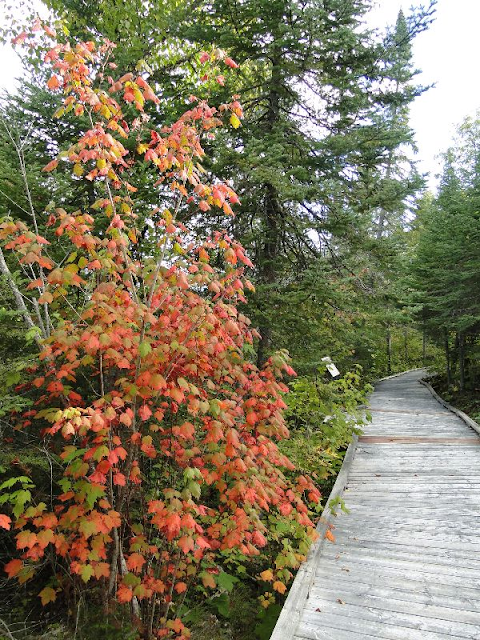 Fall colours at Tourist centre, Pigeon River, On.