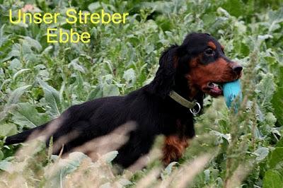 Kemtin´s Black Ebbe