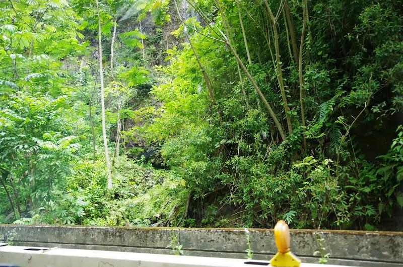 06-25-13 Annini Reef and Kauai North Shore - IMGP9345.JPG