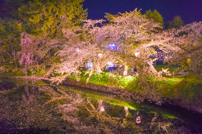 Hirosaki Park cherry blossoms illumination photo8