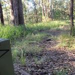 winding through the bush (58160)