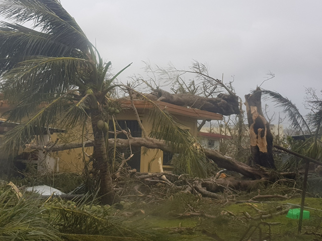 On the island of Saipain, a damaged home and a large tree snapped in half by Typhoon Yutu, 24 October 2018. Photo: MaggieAnn670 / Twitter
