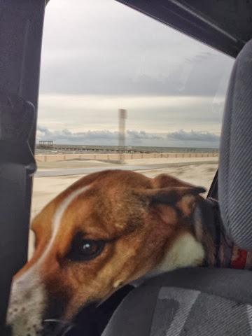 Best Dog Friendly Hike Marin Headlands