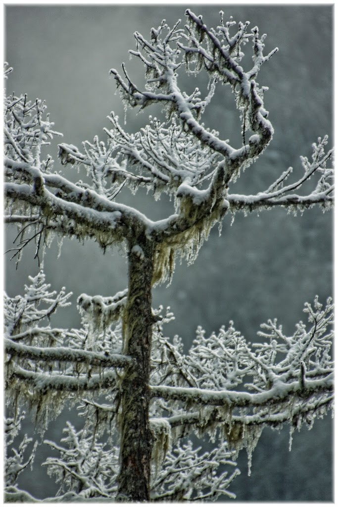 """""""A sign of Winter"""" by Barbara Lippert -- 2nd place A Special"""