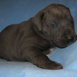 Mies boy @ 4 weeks