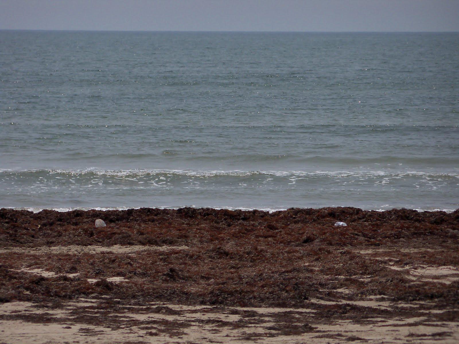 Surfside 2011 - 100_9478.JPG