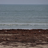 Surfside 2011 - 100_9478.JPG