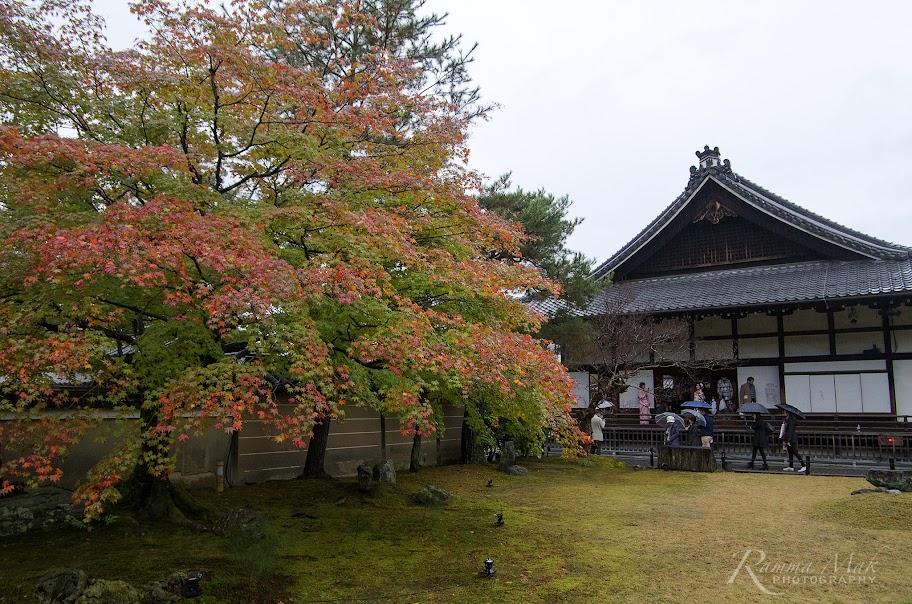 高台寺內園景
