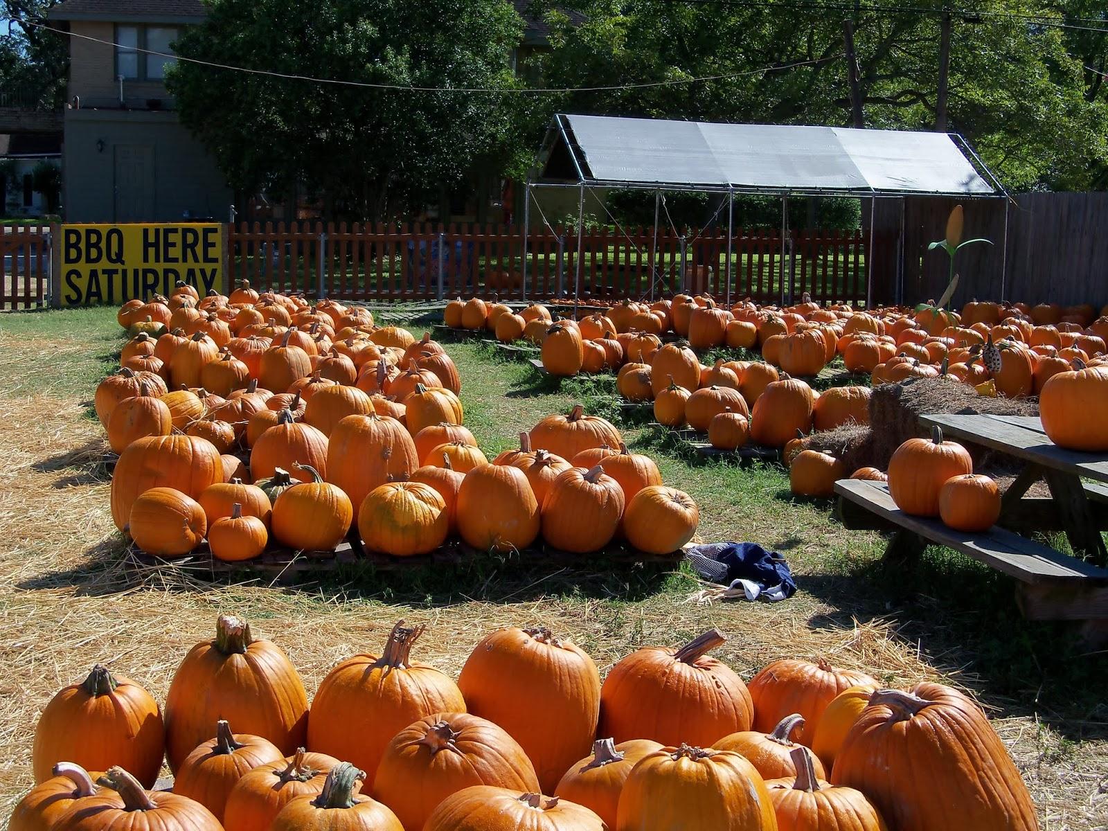 Pumpkin Patch - 115_8237.JPG