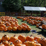 Pumpkin Patch - 115_8237.JPG