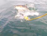 6. Afrique du Sud - Shark cage diving
