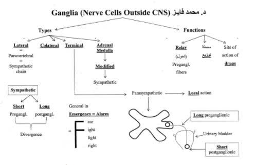 مذكرات فسيولوجي pdf