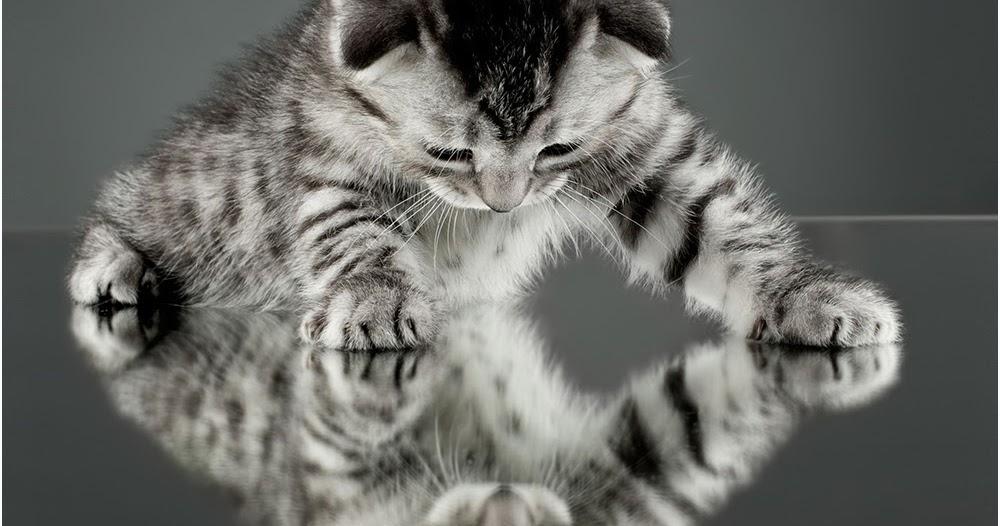 Testclod chaton reflets dans le miroir for Reflet dans le miroir