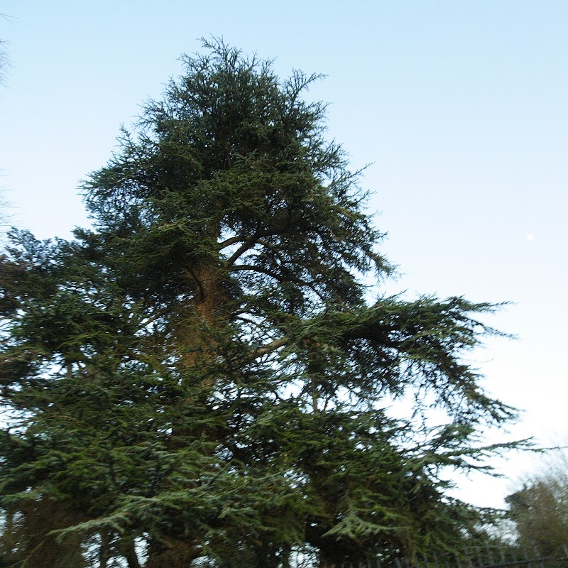 Stowe_Trees_30.JPG
