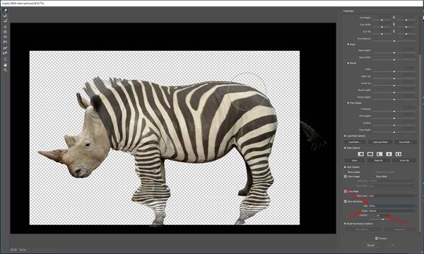 zebra5