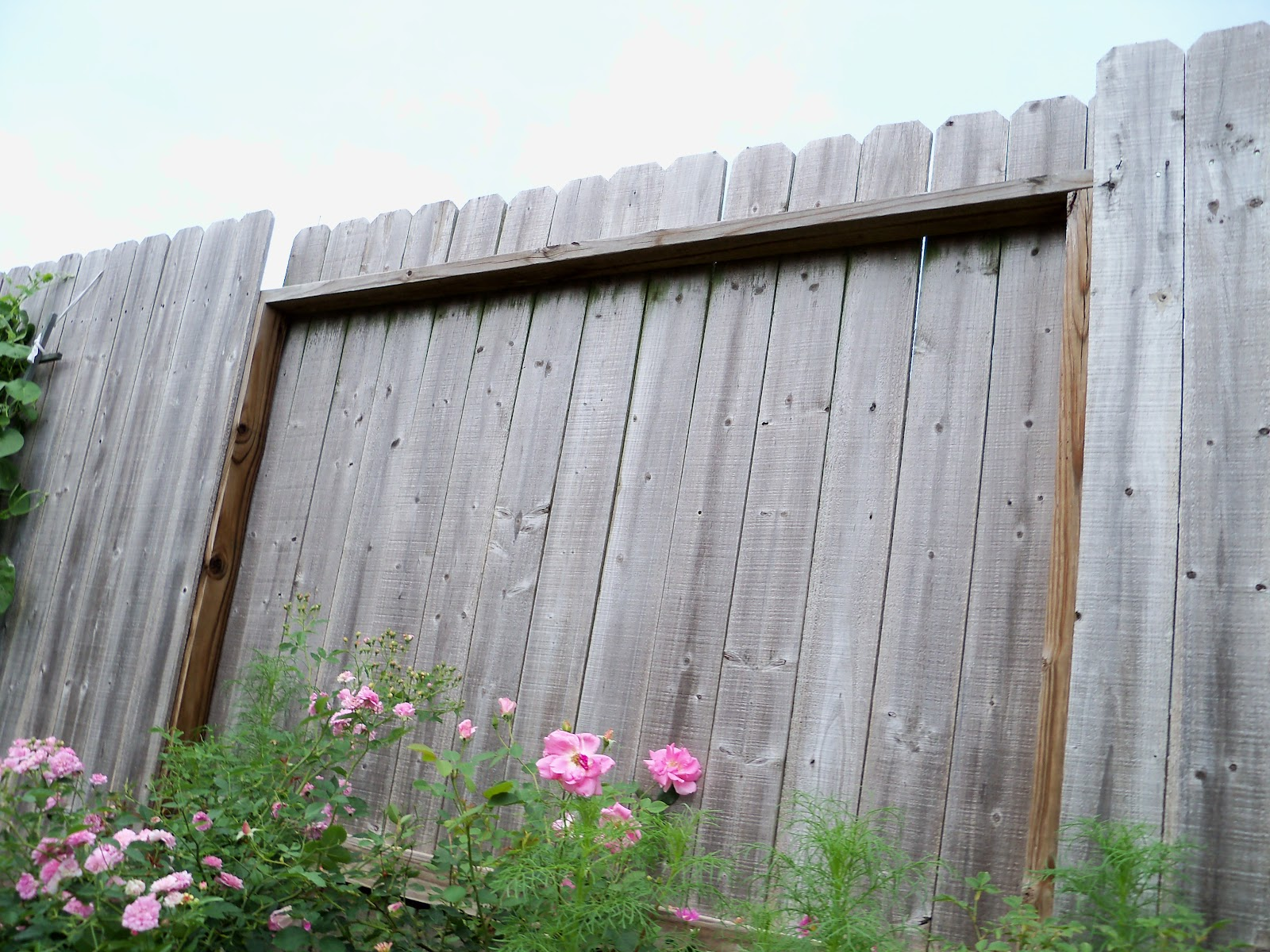 Gardening 2010, Part Two - 101_2405.JPG