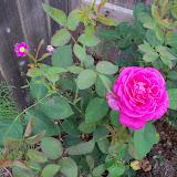 Gardening 2010, Part Two - 101_2526.JPG