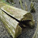 Beidler Forest 015.jpg