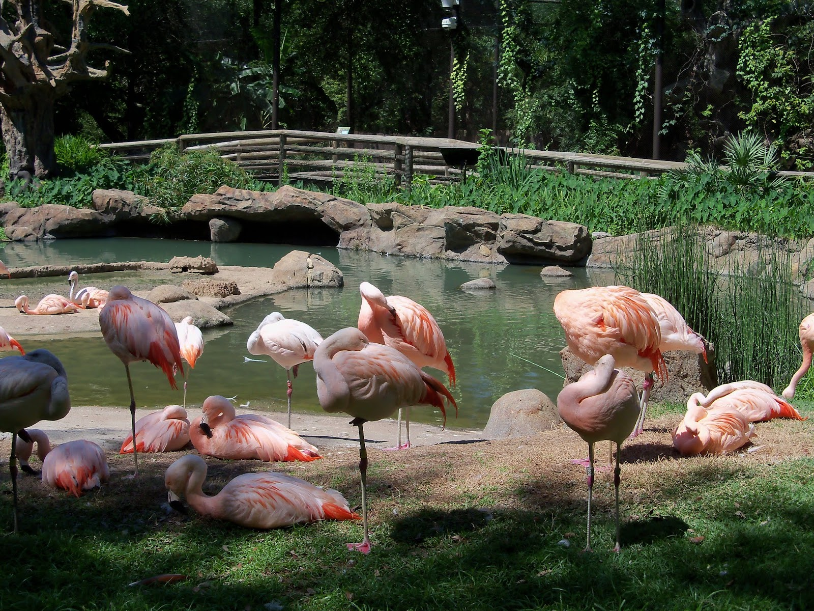 Houston Zoo - 116_8455.JPG