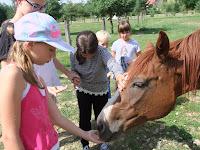 A bátrabbak a lóval is barátkozhattak.JPG