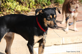 Ghia - Rehomed Portugal and Essex UK