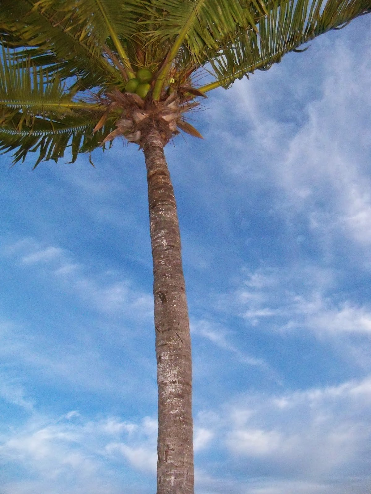 Key West Vacation - 116_5552.JPG