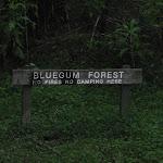Blue Gum Forest sign (50576)