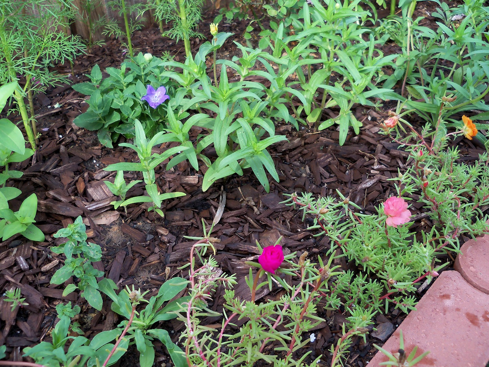 Gardening 2010, Part Two - 101_2201.JPG