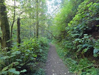 Silver Falls Trail
