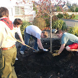 Tree Planting November 2010 - 110410%2B029.JPG