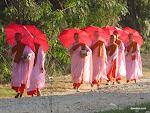 Nuns, Nyaungshwe  [2013]
