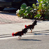 Key West Vacation - 116_5385.JPG