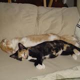 Tess and Tink.