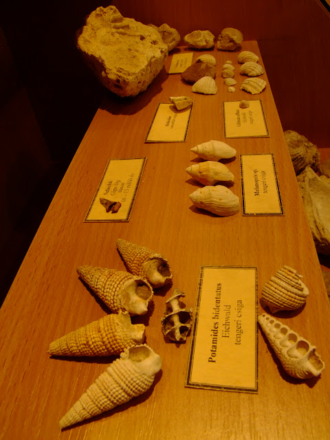Tengeri madarvány-leletek-Vanyarcon