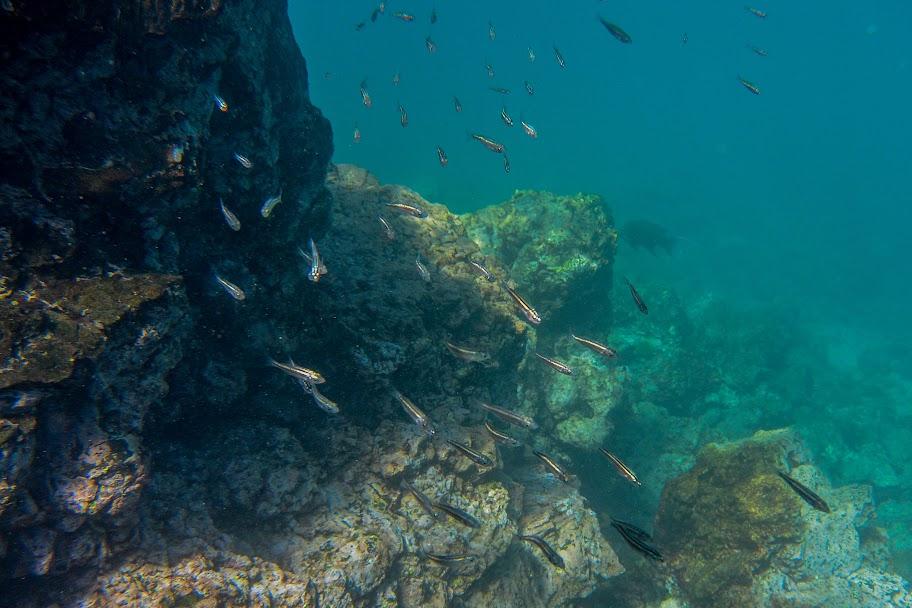 galapagos - Galapagos_FB-110.jpg