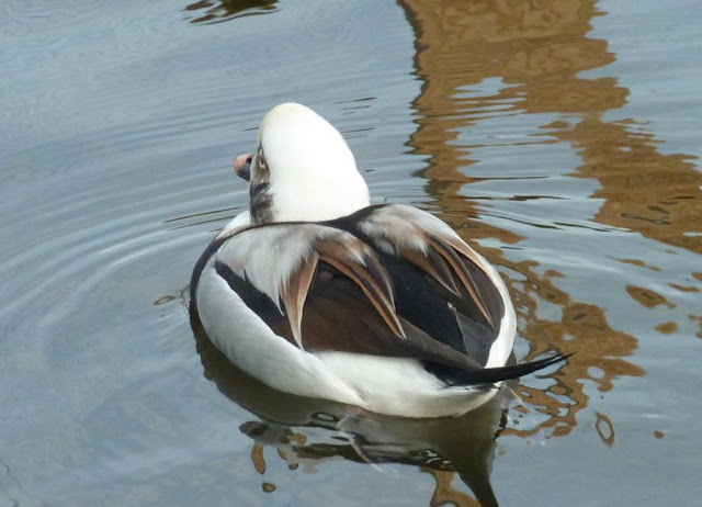 Livingston Ripley Waterfowl Conservancy - P1020574.JPG