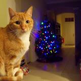 Christmastime - 116_6384.JPG