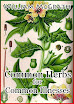 William McGrath - Common Herbs for Common Illnesses