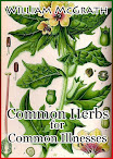 Common Herbs for Common Illnesses