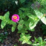 Gardening 2010, Part Two - 101_2602.JPG