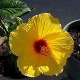 Gardening 2010, Part Two - 101_2514.JPG
